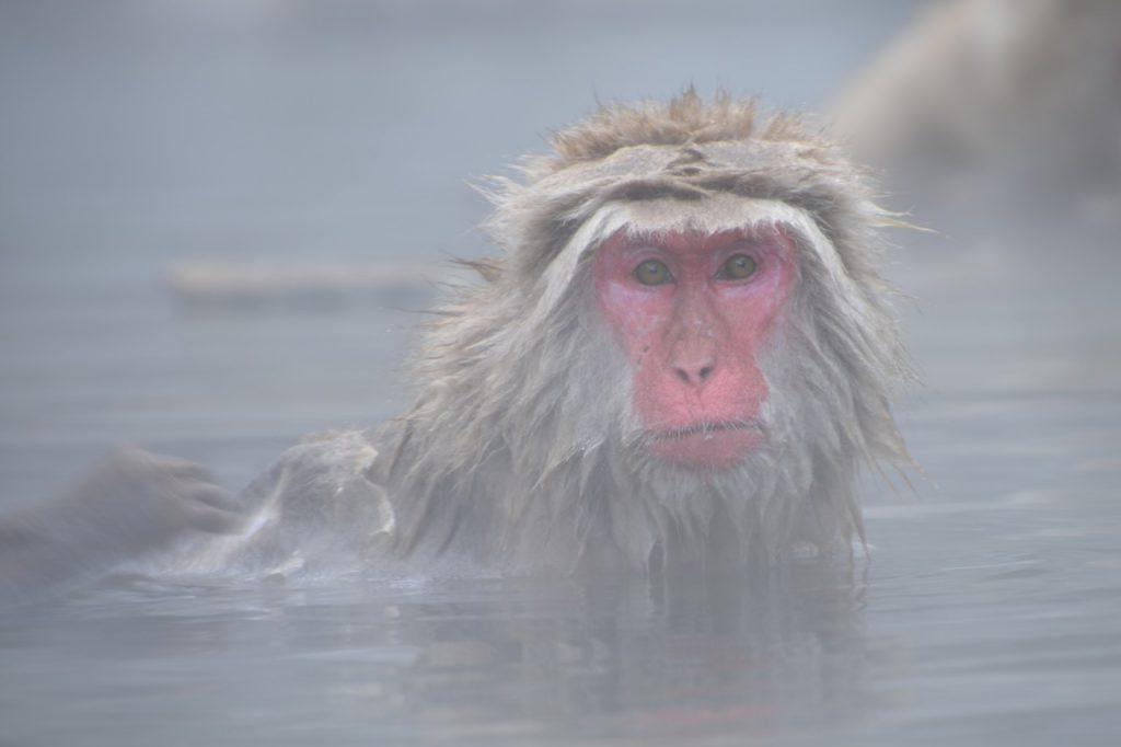 入浴の歴史